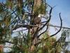 Hunakwa Lake eagle